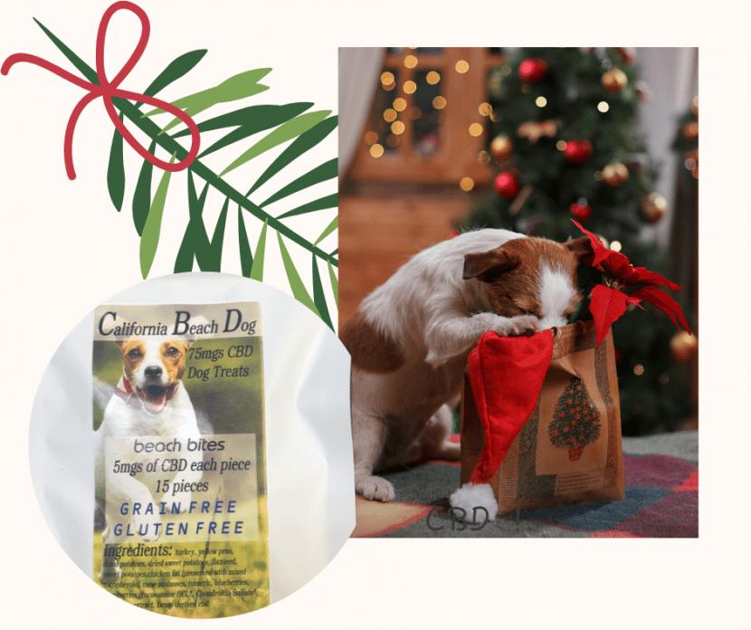 cali beach dog pet treats cbd